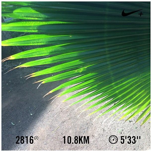 It's like I never left the track.  #nikeplus #nikerunning #werun2016 #werunkalaburagi #nature #nofilter
