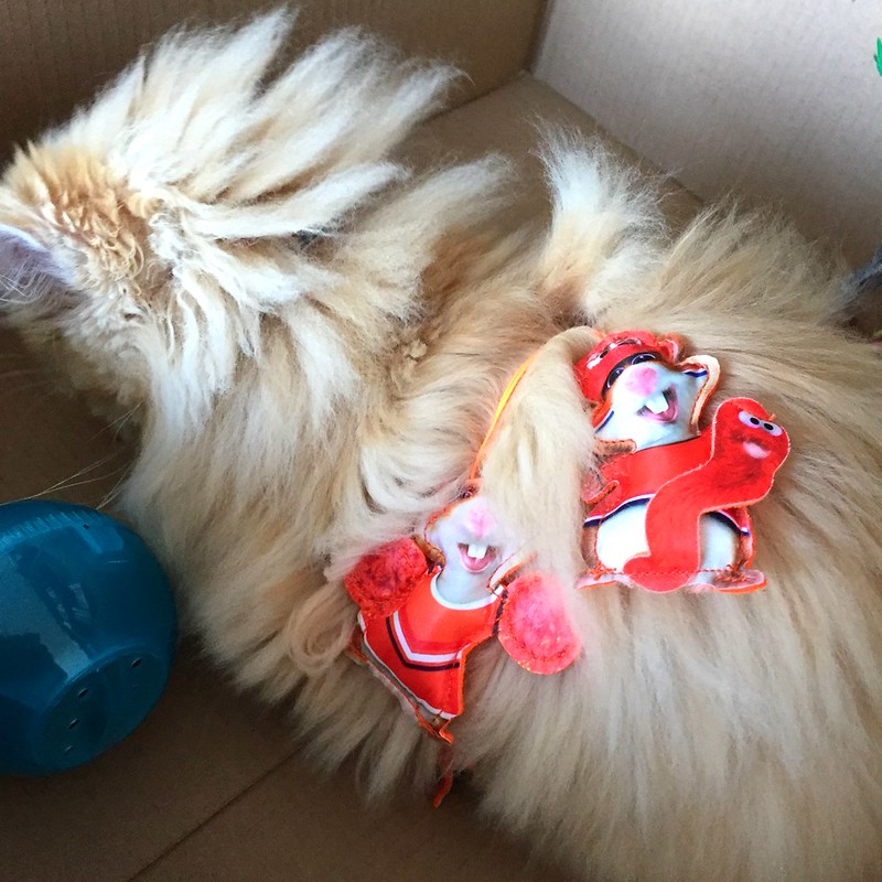 Sintra keeps itself busy and active playing with PetSafe SlimCat Interactive Toy and Food Dispenser