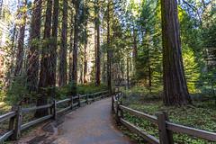 Kings Canyon & Sequoia - 49