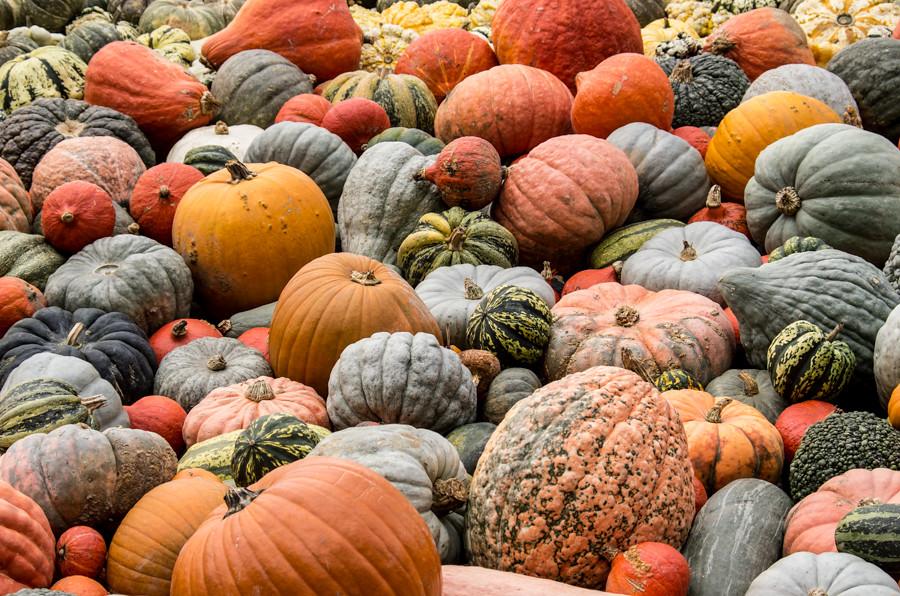Pumpkinfest-1464