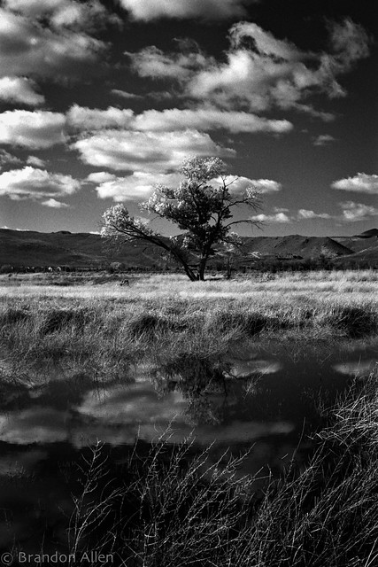 Tree and Marshes 1