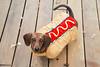 Mr. Big the Hot Dog