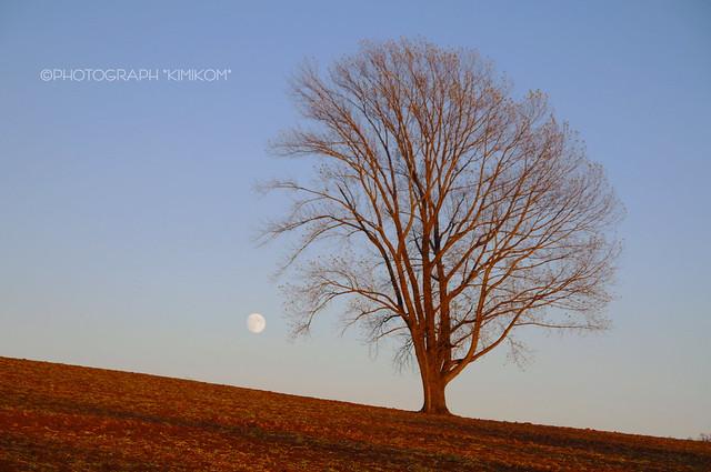 後の十三夜と哲学の木