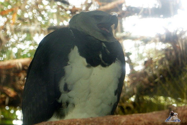 Belize Zoo 19.11.2014 119