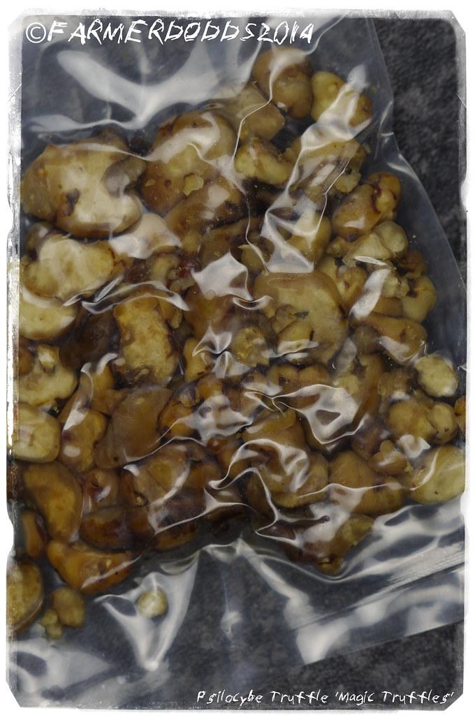Psilocybe Truffle 'Magic Truffles'   Farmer Dodds   Flickr