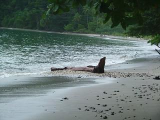 Costa Rica 2006 - 022