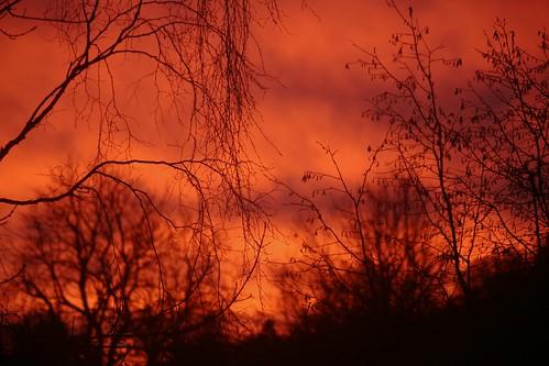 trees winter sunset sky skåne sweden