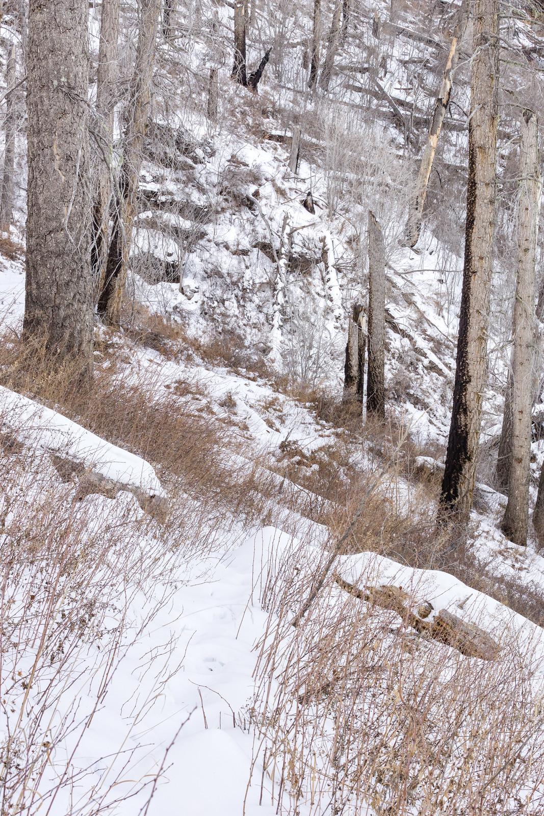 1412 Snow on the Butterfly Trail below Mount Bigelow
