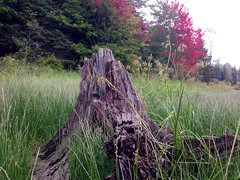 Just a stump at Second Connecticut Lake in Pittsburg, NH.