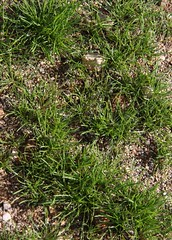 Lawn, As It Were