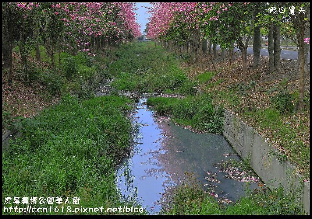 虎尾農博公園美人樹_DSC7528