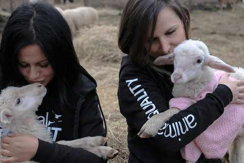 Agnelli salvati da Animal Equality