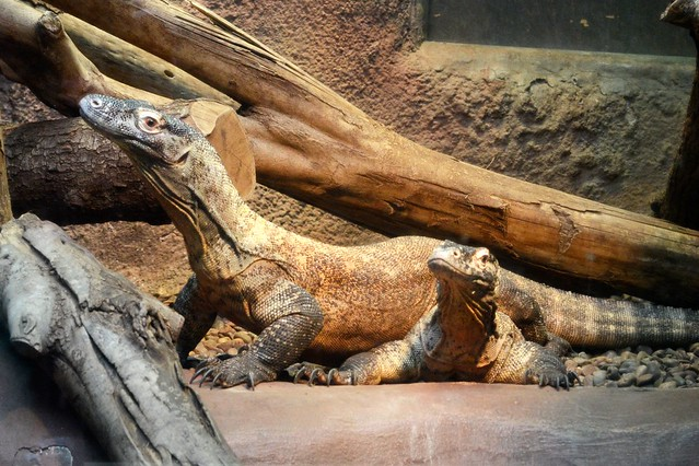 Riverbanks Zoo And Garden In Columbia South Carolina Mr