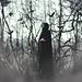 "1/52 ""Lonesome raven"" by Kathleen Kayla Shing"