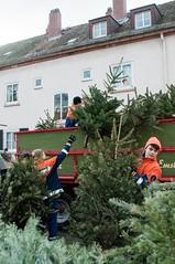 Weihnachtsbaumsammlung - 10.01.15
