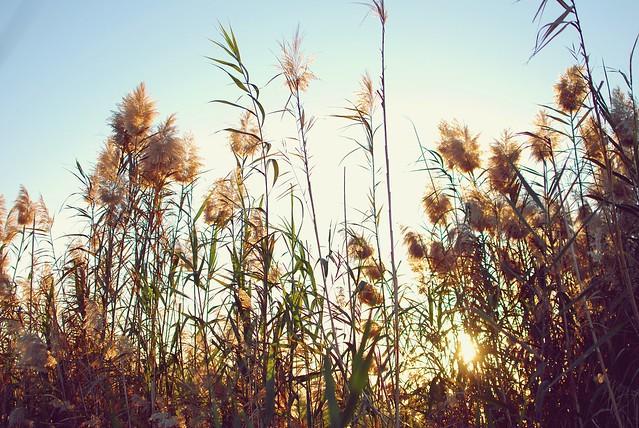 Tall grass 01