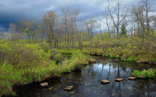sky nature clouds creek spring stream hiking pennsylvania creativecommons poconos wetland monroecounty gouldsborostatepark frankgantztrail