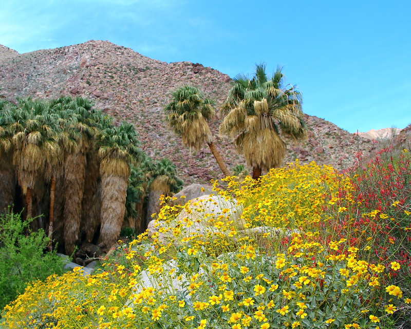 IMG_5496 Borrego Palm Canyon