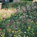 Sommerblumen by glasseyes view