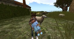 Petting The Sheep