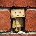 Danbo found a gap in the bricks just her size
