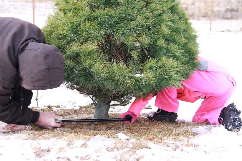 tree cut (3)
