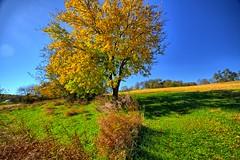Fall in the farmscape
