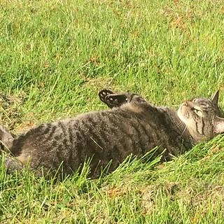 #Bärli #Sonnenbad #Garten