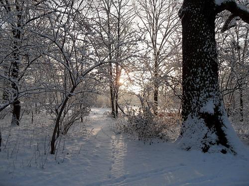 Gebüsch im Schnee mit Wintersonne