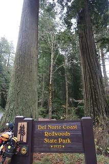 Tall redwoods!