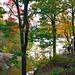 Central Park Colors by Jeffrey Friedkin