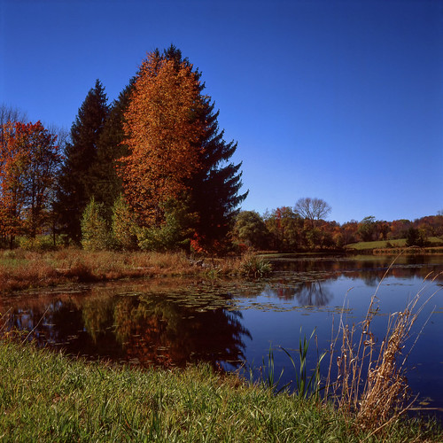 autumn lake fall tlr film nature water colors mediumformat season square landscape pond pennsylvania slide epson positive expired e6 2014 75mm minoltaautocord agfachromersxii50 rokkor75mmf35 epsonv600 epsonperfectionv600