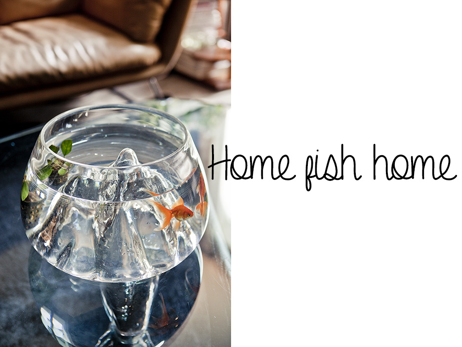 POSE-home-fish-home-1