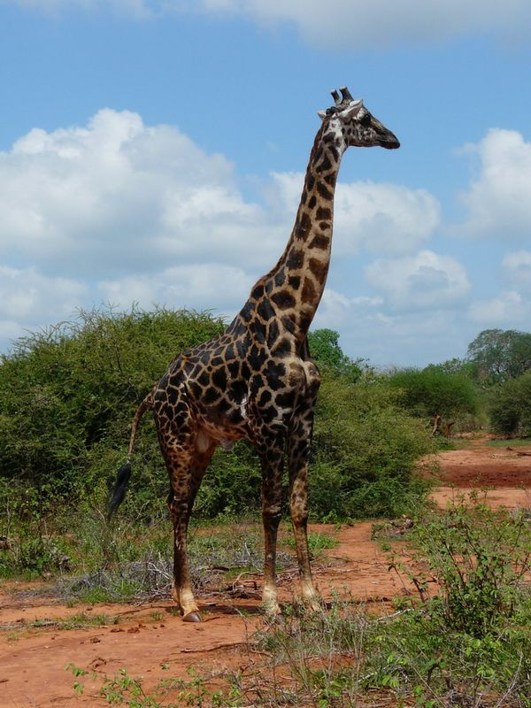 Kenia2007-0401
