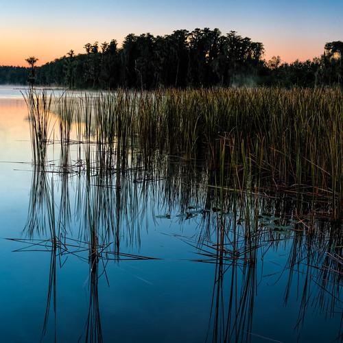 sky panorama usa lake plant reflection reed water sunrise landscape dawn florida clear clermont centralflorida lakelouisastatepark edrosack