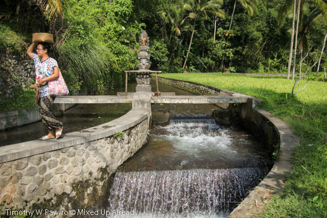 Indonesia - Bali - Candi Gunung Kawi - A peaceful view of the river and a paddy field beside the stairs to the temple