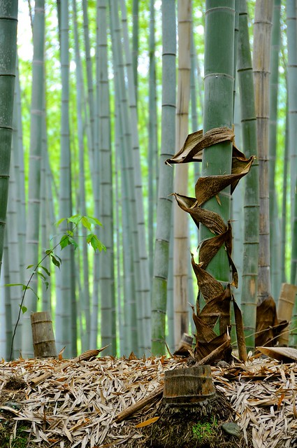 Bamboo sheds it shoot covers