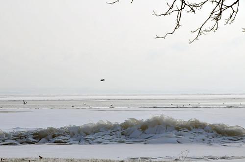 trees lake snow ice wisconsin frozen oshkosh nikond300 iceshoves