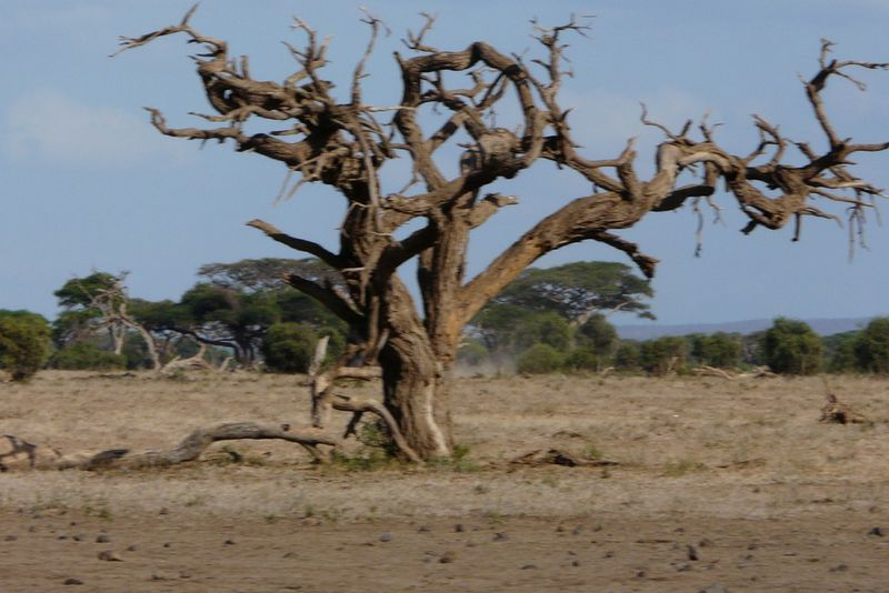 Kenia2007-0678