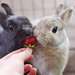[13/52] Sharing a Strawberry