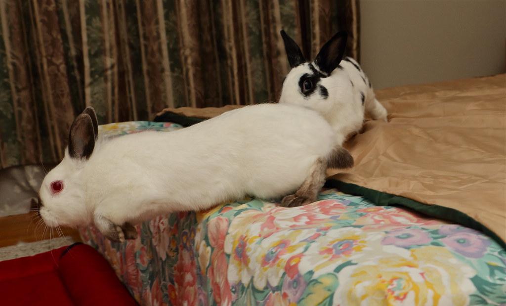 兔兔的生活---大佛