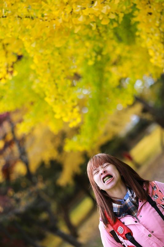 日本自由行 日本東北 青森縣 弘前城 日本自駕行程安排 日本賞楓熱門景點 日本城堡 楓葉 賞楓行程安排 交通規劃 如何去青森縣 天氣 銀杏 散策 陳美可
