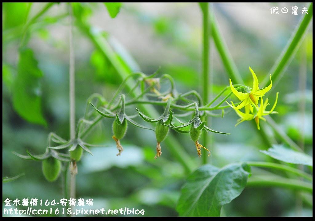 金水農情164-安梅農場_DSC8354