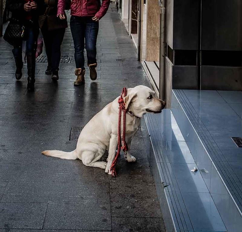 Esperando al jefe
