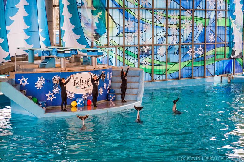 Dolphin Show Sea World San Antonio