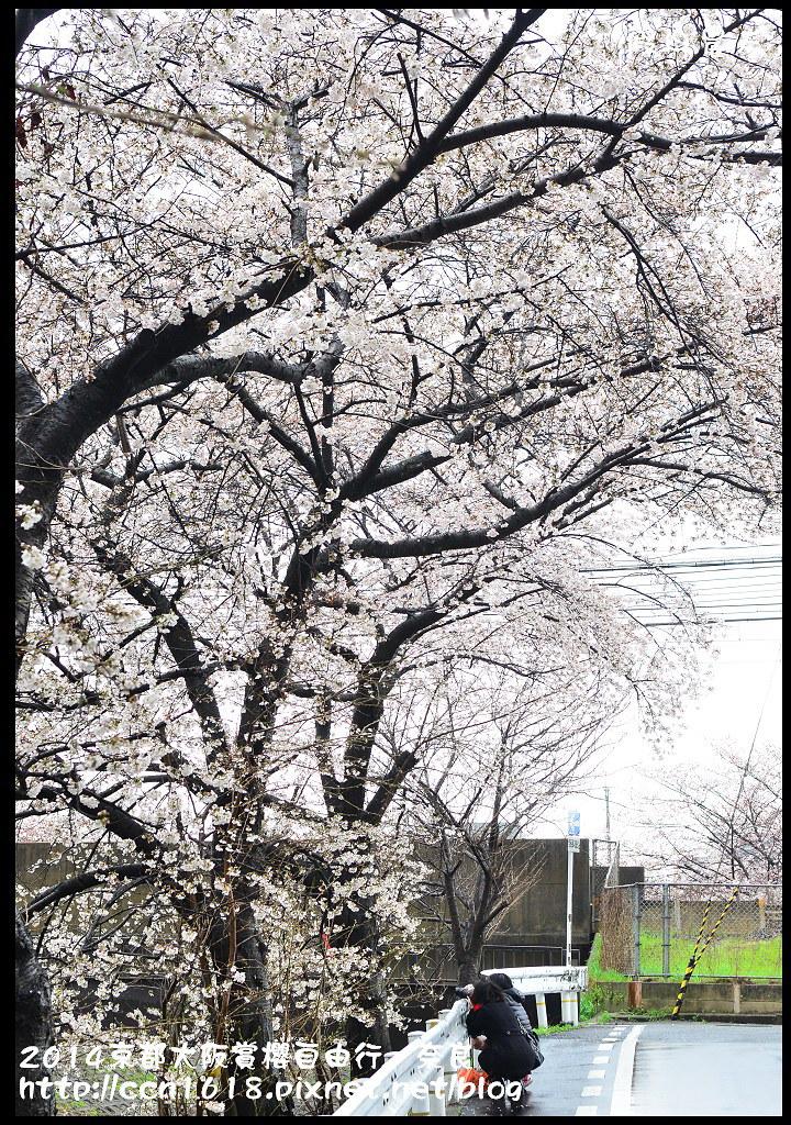 2014京都大阪賞櫻自由行.奈良DSC_0854