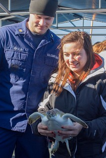 Petty Officer 2nd Class Mitchel Heavilin, a gunner's mate aboard Coast Guard Cutter Kodiak Island out of Atlantic Beach, N.C., looks on as a civilian passenger prepares to release a sea turtle from cutter Kodiak Island off the the North Carolina coast, Dec. 15, 2014. The Coast Guard, in cooperation with the North Carolina Resources Commission, released a total of 19 rehabilitated sea turtles into the Gulf Stream off the coast of North Carolina. (Photo by Kevin E. Geraghty)