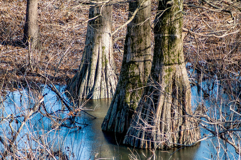 Eagle Slough Natural Area - January 5, 2015