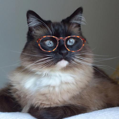 Bean_Glasses_5