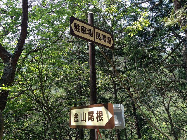竜ヶ岳 金山尾根入口